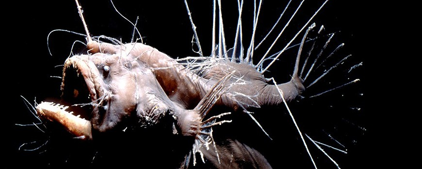 Peces abisales: 7 criaturas marinas increíbles