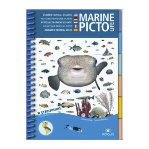 Marine PICTOLIFE Atlántico Tropical Oeste