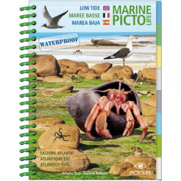 Marine PICTOLIFE Marea baja - Low Tide
