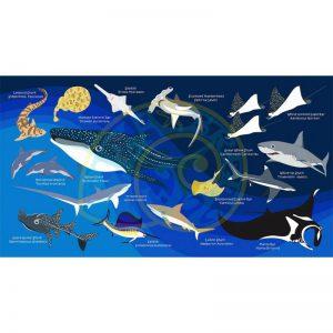 Toalla Tiburones y Rayas azul oscuro - Grande 80x140 - ecotiendabuceo Oceanarium