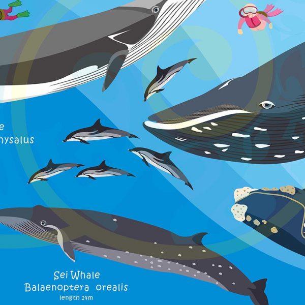 Toalla Cetáceos ballenas y delfines - Grande 80x140 - ecotiendabuceo Oceanarium