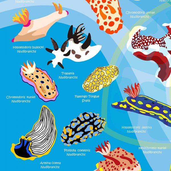 Toalla Nudibranquios azul claro - Grande 80x140 - ecotiendabuceo Oceanarium