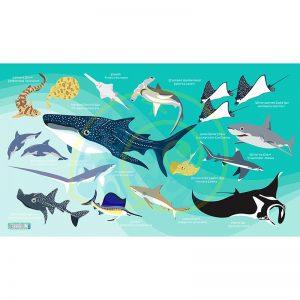 Toalla Tiburones y Rayas azul claro - Grande 80x140 - ecotiendabuceo Oceanarium